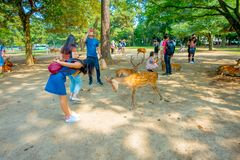 Nara, Japan - July 26, 2017: Unidentified woman wearing a jean dress, playing with some wild deer in Nara, Japan. Nara. Is a major tourism destination in Japan Stock Photos