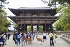 NARA, JAPAN 25. MAI 2016: Touristen und wilde Rotwild in Nara am 25. Mai 2016 Die Rotwild in Nara sind als himmlische Tiere betra Lizenzfreies Stockfoto
