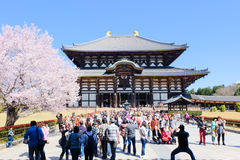 Nara japan Royalty Free Stock Photos