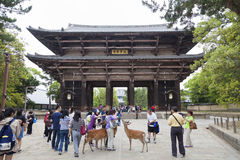 NARA,JAPAN- MAY 25, 2016: Tourists and wild deer in Nara on May 25, 2016. The deer in Nara have been regarded as heavenly royalty free stock photo
