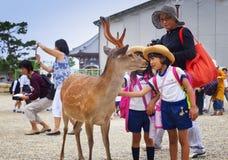 NARA, JAPAN 25 MEI, 2016: Toeristen en wilde herten in Nara op 25 Mei, 2016 De herten in Nara zijn beschouwd als hemelse dieren, royalty-vrije stock afbeeldingen