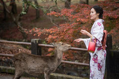 NARA, JAPAN - NOVEMBER 26: Tourists and wild deer in Nara on Nov royalty free stock images