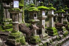 NARA, JAPON - 2 AVRIL 2019 : Jeunes cerfs communs et vieilles lanternes japonaises en pierre dans le tombeau grand de Kasuga, Nar photographie stock libre de droits