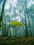 Nara, Japon - 26 juillet 2017 : Beau paysage d'automne, arbres jaunes d'automne et feuilles, feuillage coloré pendant l'automne Images stock