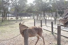 Nara kochany obraz stock