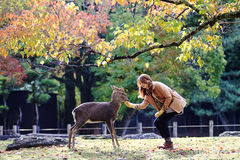 Nara is a major tourism destination Stock Images