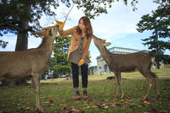 Nara is a major tourism destination Stock Photos