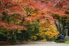 Nara Park, Nara, Giappone immagini stock libere da diritti