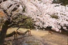 Nara Park, Giappone immagini stock libere da diritti