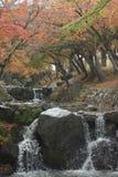 Nara Park, Giappone fotografia stock libera da diritti