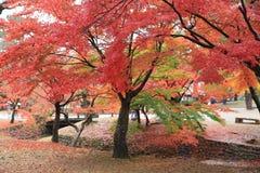 Nara Park i Nara, Japan Arkivfoto