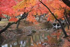 Nara Park i Nara, Japan Arkivbild
