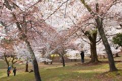 Nara Park, Japón Imagenes de archivo