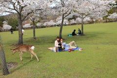 Nara Park, Japan stock fotografie