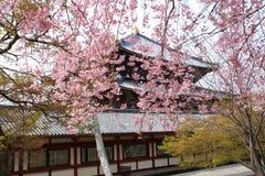 Nara Park Japan royaltyfria bilder