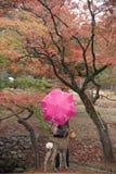 Nara Park, Japan Royalty Free Stock Photos