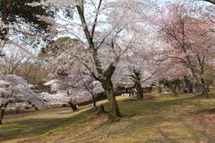 Nara Park,Japan Stock Image