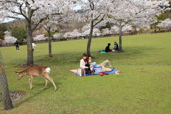 Nara Park,Japan stock photography