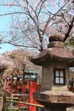 Nara Park,Japan Royalty Free Stock Images