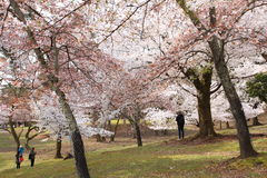Nara Park, Japon Images stock