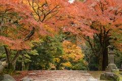 Nara park, Japonia obrazy royalty free