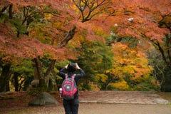 Nara park, Nara, Japonia Zdjęcie Stock
