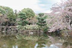 Nara Park In Springtime royalty-vrije stock foto