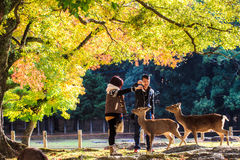 Nara Part à la chute Photographie stock