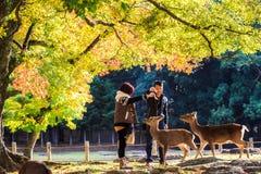 Nara Part alla caduta Fotografia Stock