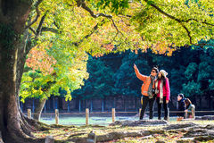 Nara Part bij daling Stock Afbeeldingen