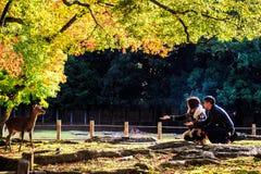 Nara Part bij daling Royalty-vrije Stock Afbeelding