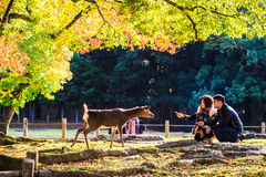Nara Part bij daling Stock Foto