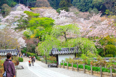 Nara temple in spring Royalty Free Stock Image