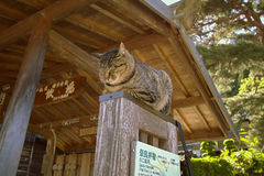 NARAI JAPAN - JUNI 4, 2017: Grå katt på en träpol på Narai Fotografering för Bildbyråer