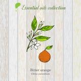 Naranja amarga, etiqueta del aceite esencial, planta aromática Imagen de archivo