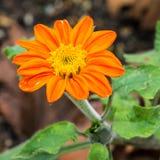 Naranja brillante Fotografía de archivo