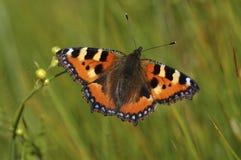 Naranja buuterfly 2 Fotografía de archivo