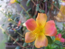 Naranja de la flor Imagenes de archivo