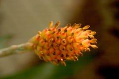 Naranja de la proyección Foto de archivo
