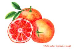 Naranja de sangre de la acuarela Ejemplo aislado de los agrios Foto de archivo libre de regalías