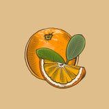 Naranja en estilo del vintage Ilustración coloreada del vector Imagenes de archivo