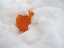 Naranja en la nieve Imagenes de archivo