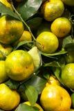 Naranja fresca con la hoja en pila Fotografía de archivo