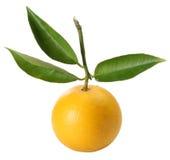 Naranja fresca con las hojas Foto de archivo libre de regalías