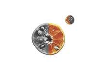 Naranja gris en blanco aislada fotografía de archivo libre de regalías