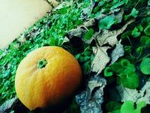 Naranja hermosa del lanzamiento Fotos de archivo