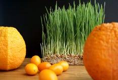 Naranja, kumquat y trigo verde brotado Imagenes de archivo