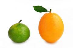 Naranja navel madura y naranja inmadura en la sol, cartel creativo Foto de archivo