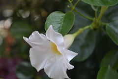 Naranja púrpura blanca de las flores del rosa colorido del ramo foto de archivo libre de regalías