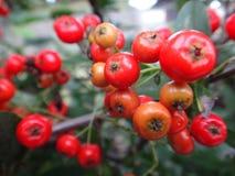 Naranja roja imagen de archivo libre de regalías